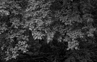 Wind-in-the-trees from nellisoft B & W